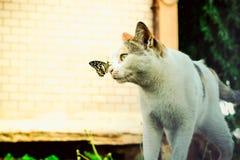 Katze und Schmetterling, die zusammen im Garten spielen lizenzfreies stockfoto