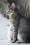 Katze und weißes Kätzchen Stockbilder