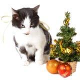 Katze- und Weihnachtsdekorationen Stockfotografie