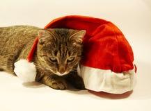 Katze und Weihnachtshut lizenzfreies stockbild