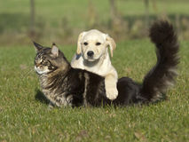 Katze und Welpe Lizenzfreie Stockfotos