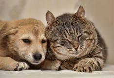 Katze und Welpe lizenzfreies stockfoto