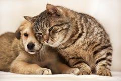 Katze und Welpe stockfotos
