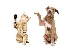 Katze und Welpe, die zusammen mit angehobenen Tatzen sitzen stockbild