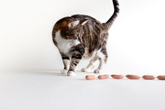 Katze und Würste Stockbild