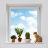 Katze und Zimmerpflanzen auf dem Fensterbrett lizenzfreies stockfoto