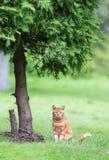 Katze unter Baum Stockbild
