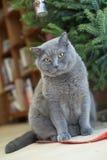 Katze unter Baum des neuen Jahres Lizenzfreies Stockbild