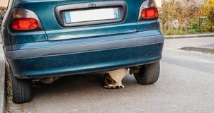 Katze unter dem Autoverstecken Lizenzfreie Stockfotografie