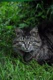 Katze unter dem Busch im grünen Gras stockbild