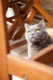 Katze unter der Tabelle, die oben schaut Stockbild