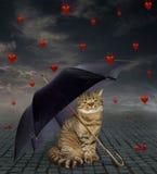 Katze unter einem Regenschirm und defekten Herzen lizenzfreie stockfotografie
