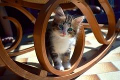 Katze unter einem Schaukelstuhl lizenzfreie stockbilder