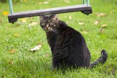 Katze unter einem Schwingen Lizenzfreie Stockfotografie