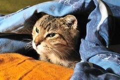 Katze unter einer Decke lizenzfreies stockfoto