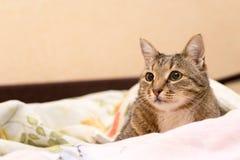 Katze unter einer Decke Stockfotografie