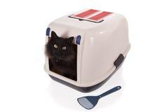 Katze unter Verwendung eines geschlossenen Sänftekastens stockbild
