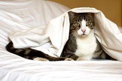 Katze unter weißem Blatt stockbild
