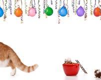 Katze verlässt lizenzfreies stockbild