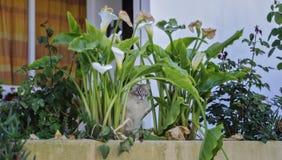 Katze versteckt Lizenzfreies Stockbild