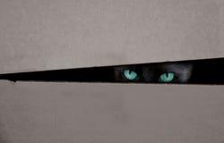 Katze versteckt in einem Kasten stockfotos