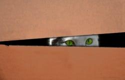 Katze versteckt in einem Kasten lizenzfreie stockfotos