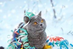 Katze verwickelt im bunten Ausläufer Lizenzfreie Stockbilder