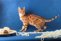 Katze von Bengal-Zucht nahe Perlen und Platten mit hölzernen Bällen Lizenzfreie Stockfotos