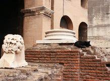 Katze von Colosseum lizenzfreie stockbilder