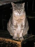 Katze von einem Chalet Lizenzfreie Stockfotografie