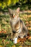 Katze von einem Schutz lizenzfreie stockbilder