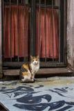 Katze vor einem Fenster mit Eisenfensterläden Stockfotografie
