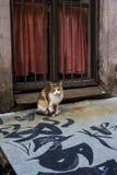 Katze vor einem Fenster mit Eisenfensterläden Lizenzfreies Stockbild