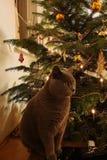 Katze vor einem Weihnachtsbaum lizenzfreie stockfotografie