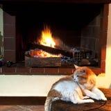 Katze vor Kamin Stockfotos