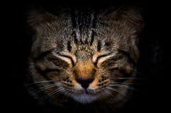 Katze während nahe Augen in der Dunkelheit stockfotos