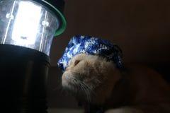 Katze war im Begriff zu schlafen Stockfotografie