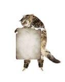 Katze, welche die Fahne, lokalisiert auf Weiß hält Lizenzfreies Stockfoto