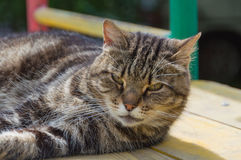 Katze, welche die Kamera betrachtet Stockfotografie