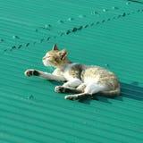 Katze, welche die Sonne genießt lizenzfreies stockfoto