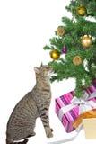 Katze, welche die verlockenden Weihnachtsdekorationen mustert Stockfoto