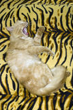 Katze wild stockbild