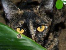 Katze wurde beim Spielen des Versteckens gefangen Stockbilder