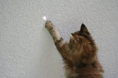 Katze am Zaun, der mit einem Strahl des Sonnenlichts spielt Lizenzfreie Stockfotos