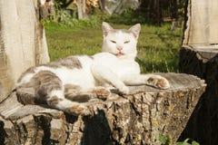 Katze zeigt seine Zunge Lizenzfreie Stockbilder