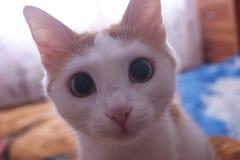 Katze zu Hause lizenzfreie stockfotos