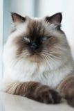 Katze zu Hause Stockfotos