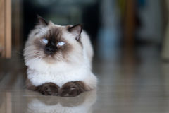 Katze zu Hause Lizenzfreie Stockbilder
