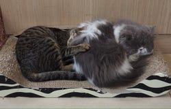 Katze zwei Stockfoto