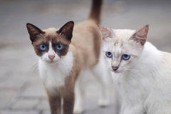 Katze zwei Lizenzfreie Stockfotografie
